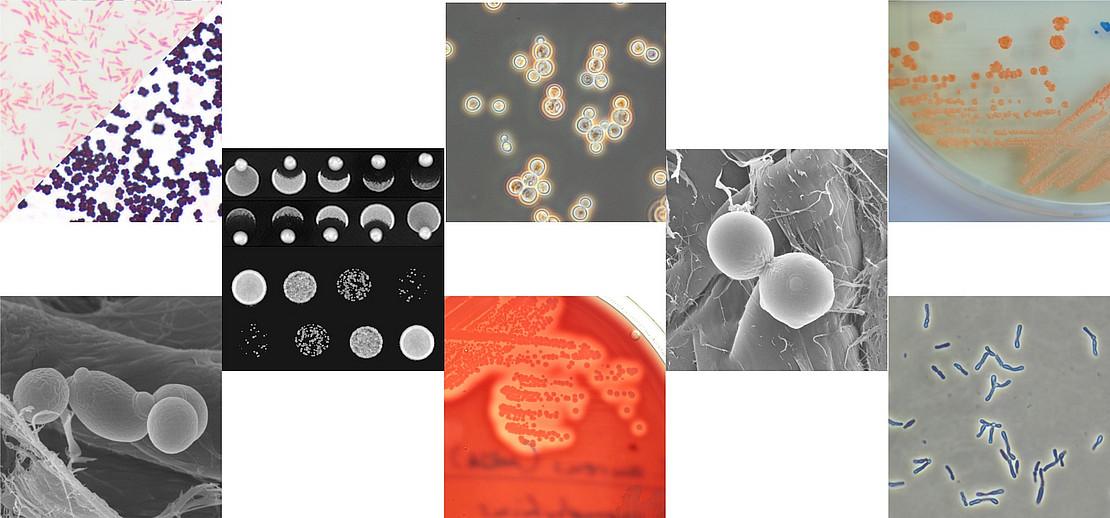 Kollage mikrobiologischer Motive